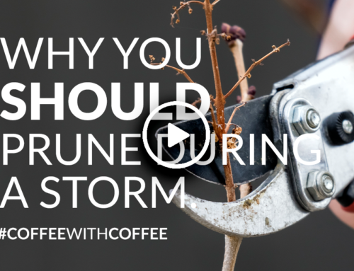 Why you should prune during a storm (Video)